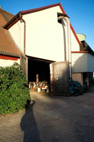 Der Kuhstall vom Mohrenhof