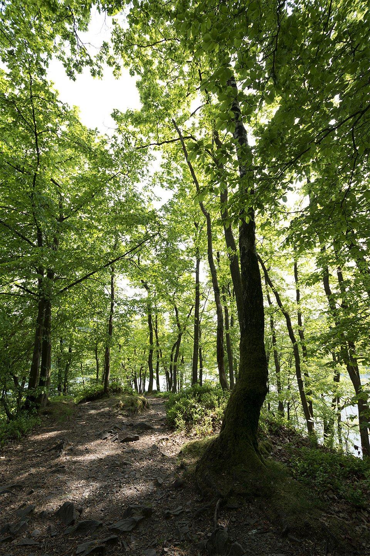 Frühlingswald an der Halbinsel der Aggertalsperre